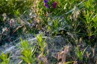 One to remember - the surrounding bushes are decorated in spider and their glorious webs.